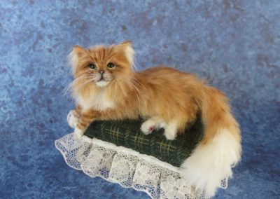 red maine coon 011
